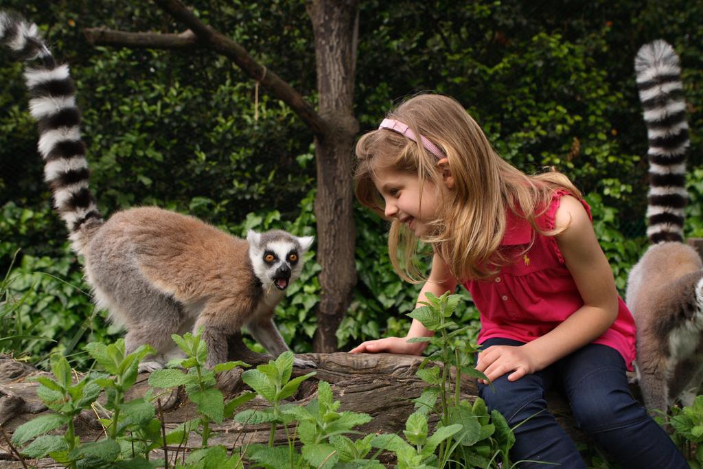 Giardino Zen Pistoia : Giardino zoologico di pistoia zoo